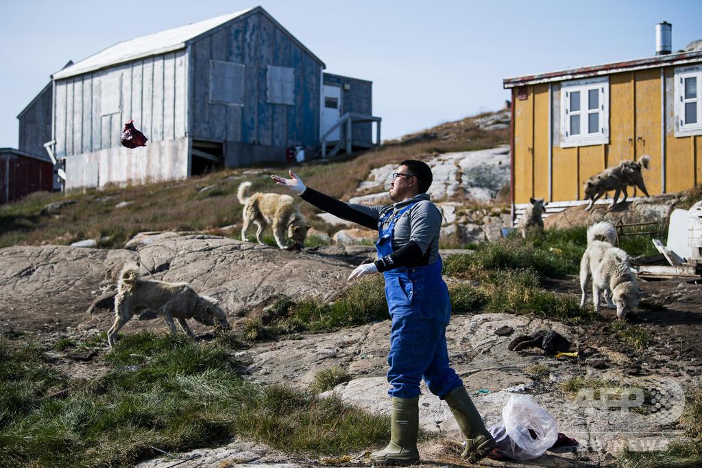 犬ぞり猟が消える? 気候変動で伝統にも危機 グリーンランド