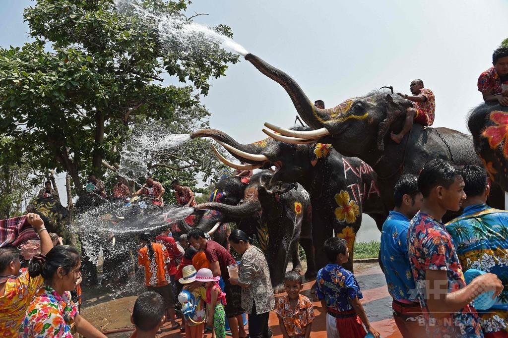 お水かけちゃうゾウ!水掛け祭りでゾウと「水合戦」 タイ