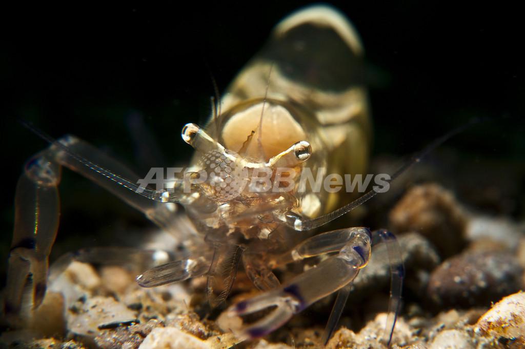 東ティモール近海の生き物とらえた写真コンテスト