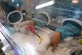 ジャイアントパンダの双子の赤ちゃんが誕生、マカオ