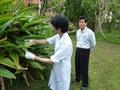 沖縄の長寿の秘密、「ゲットウ」