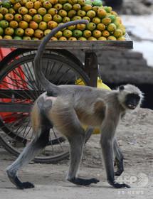 走行中のバスで運転席にサル座らせる、運転手が職務停止に インド