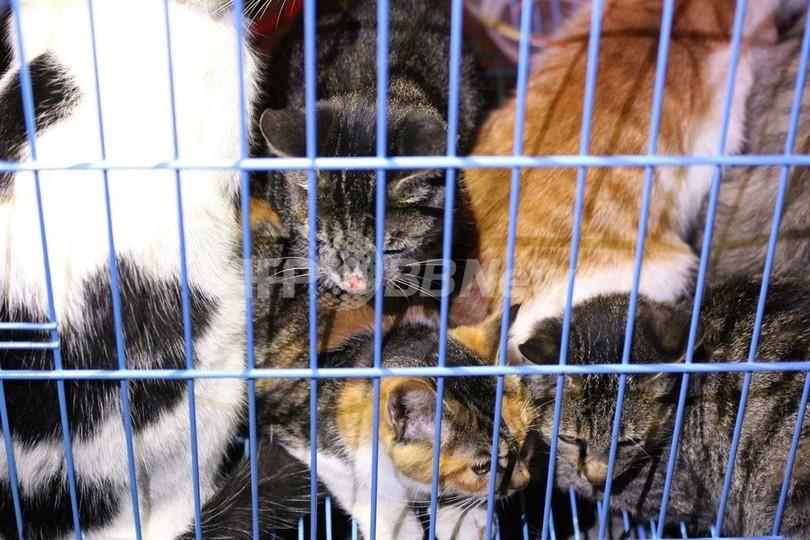 中国当局、食肉業者から押収の猫千匹を野放しに