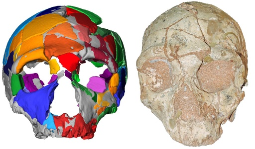 アフリカ外で最古のヒト化石発見 人類移動の歴史塗り替え