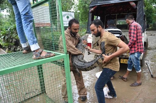24時間に500ミリの豪雨で街が冠水、市内に現れたワニが犬襲う インド