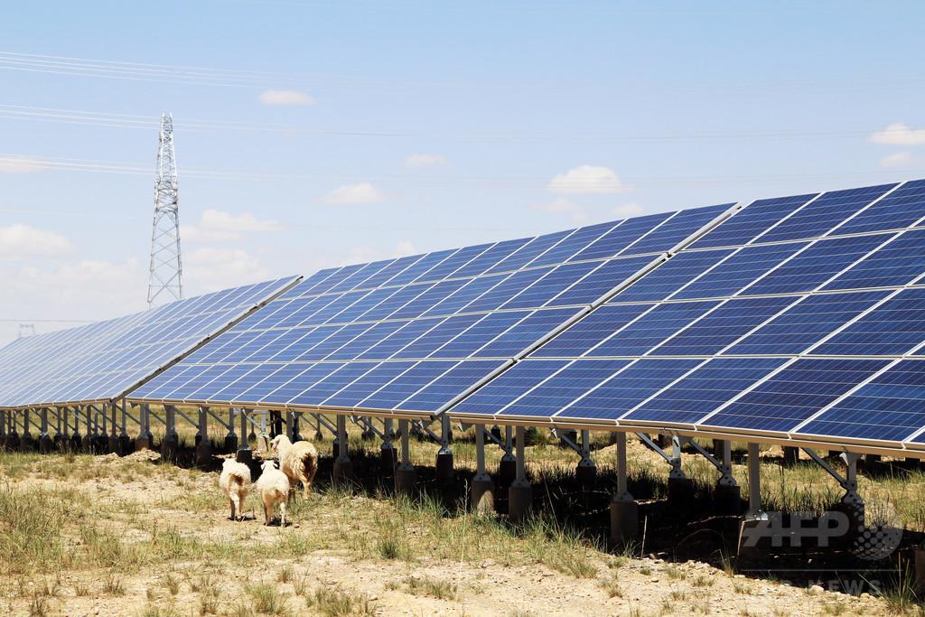 太陽光発電と砂漠の緑化 「ソーラー羊」のいる青海・海南チベット族自治州