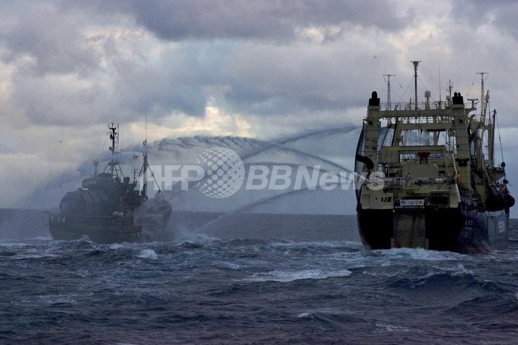捕鯨再開で日本がIWC加盟国を買収か、英紙