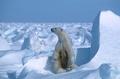 2020年の北極海氷融解、観測史上2番目の規模に