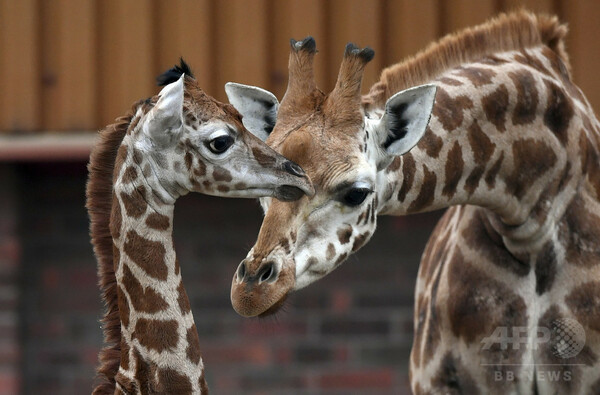英動物園、4年間で約500匹死ぬ 飼育スペース不足で安楽死も