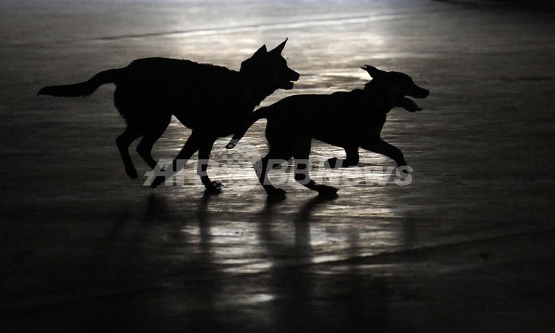 飼い犬の養育権めぐる裁判に判決、フランス