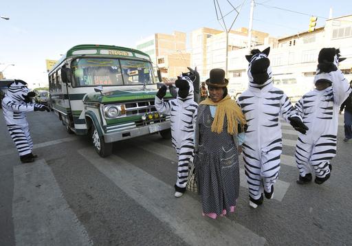 シマウマとロバの姿で交通マナーを訴える、ボリビア