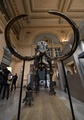 マンモスの巨大骨格標本、7300万円で落札 仏