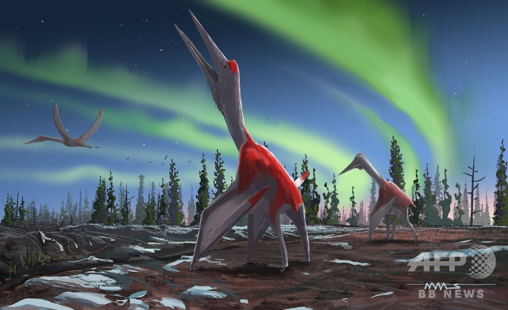 史上最大級の飛翔動物、新種翼竜を発見 翼開長10m