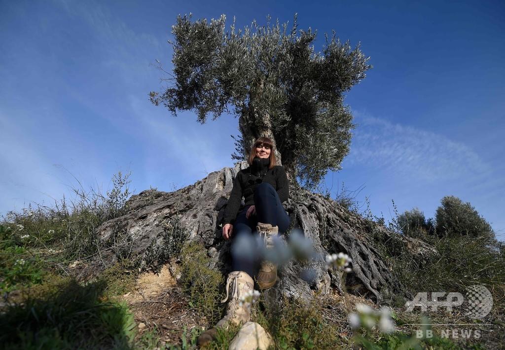 オリーブの木のサポーター制度で過疎化に対抗 スペイン