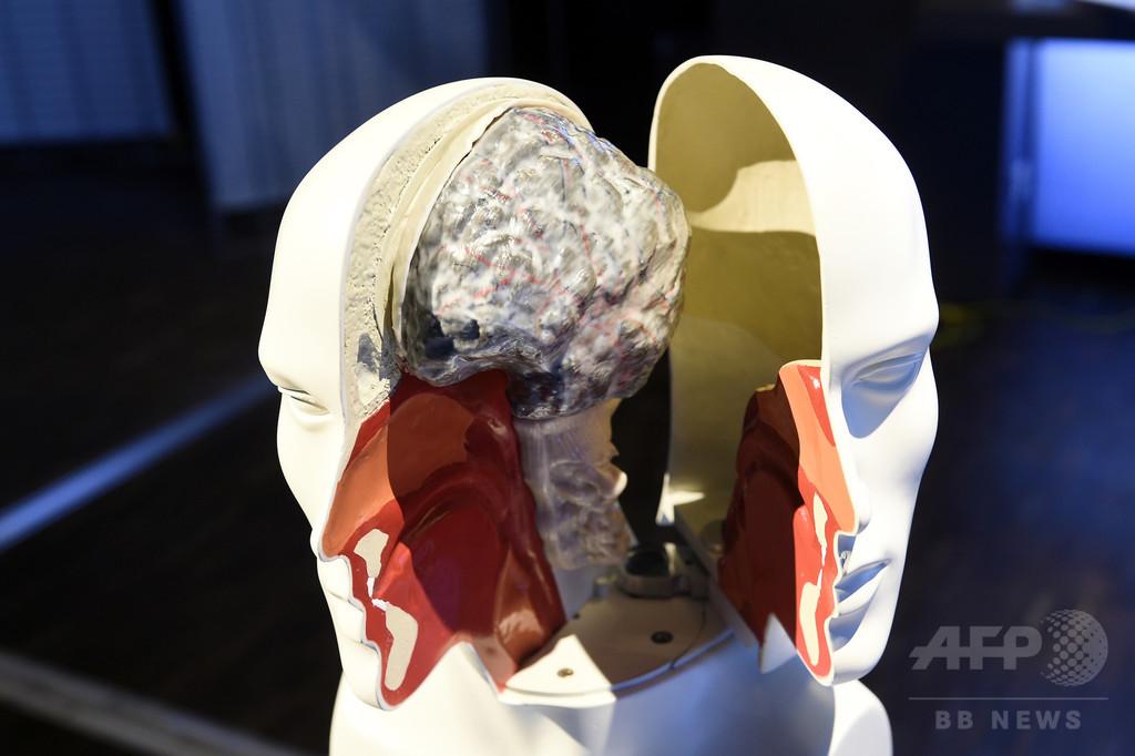 79歳でも新しい脳細胞は生まれる、米研究