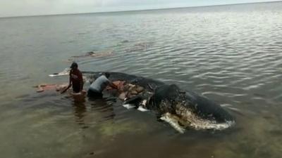 動画:死んだクジラの胃から6キロのプラスチックごみ インドネシア