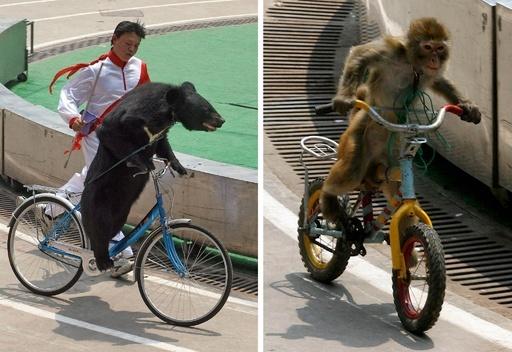 動物の自転車レース、子トラに乗る観光客 中国動物園に批判殺到