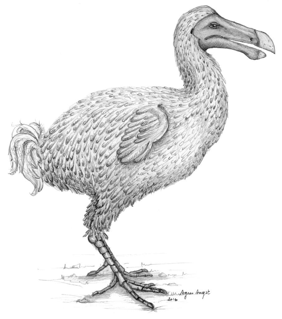 絶滅鳥「ドードー」、謎の生態を一部解明