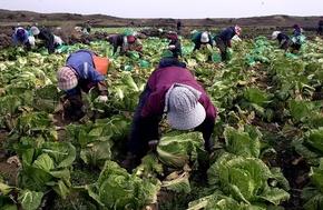 韓国で外国人労働者への「虐待がまん延」、人権団体が警告