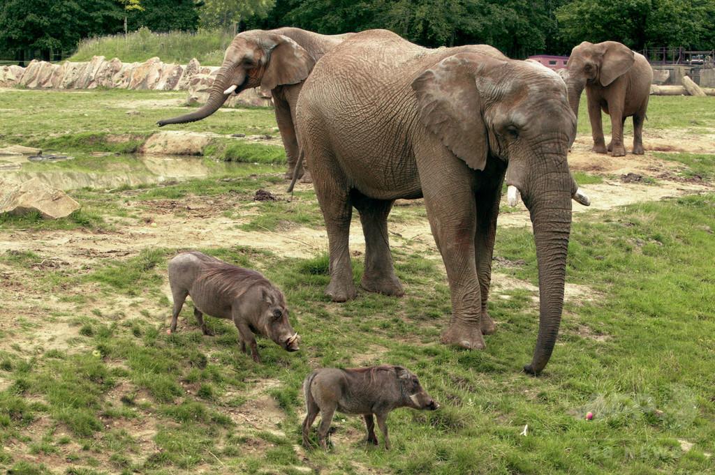 仏動物園に密猟者、シロサイ殺し角奪う 「前代未聞」の事件に衝撃