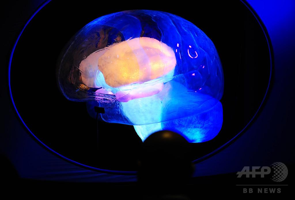 脳の「学習」細胞、13歳以降は発生しない? 定説と異なる研究結果