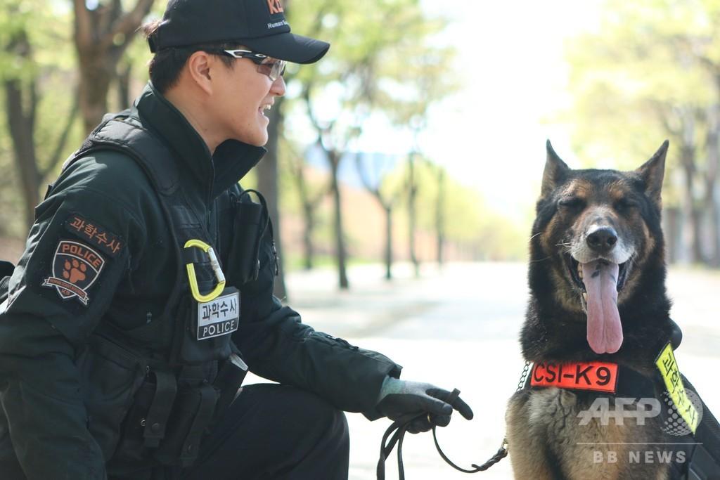 ヘビにかまれて「殉職」の警察犬を表彰へ、韓国