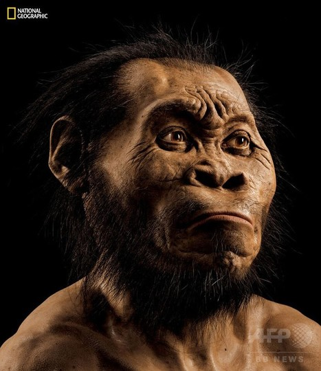 新種のヒト属の化石、南アの洞窟で発見
