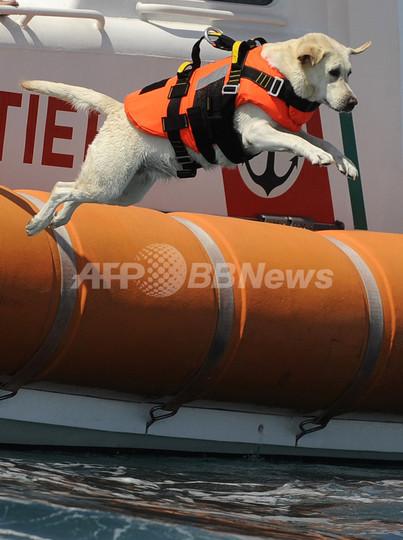 今年も人命救助に大活躍、イタリアのライフセーバー犬