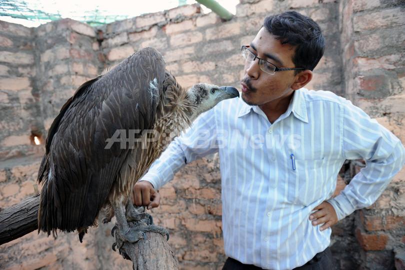 ヒンズー教祭のたこ合戦で傷ついた鳥を保護、インド