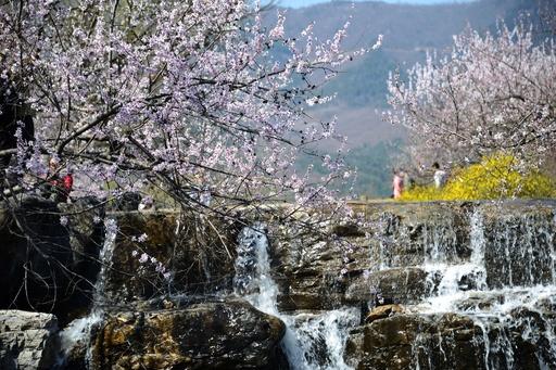 【写真特集】心躍る花盛りの絶景 中国
