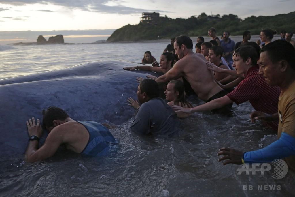 ニカラグア南部の浜辺に大型クジラ、救出は難航