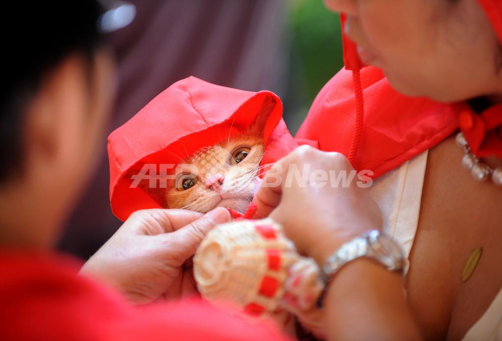仮装犬猫集合、ハロウィン募金イベント フィリピン