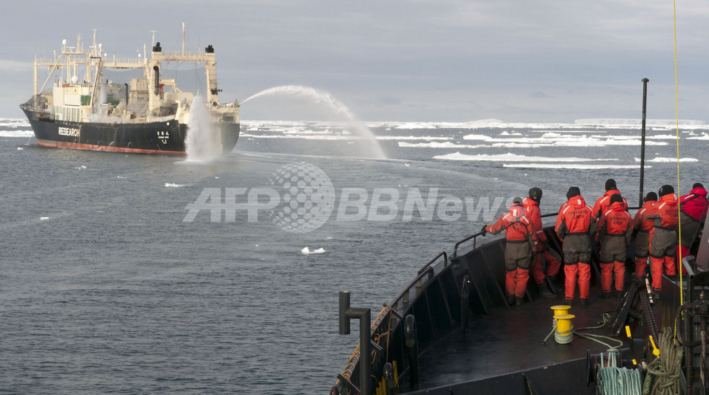 反捕鯨4か国が共同声明、活動家に「暴力の自制」求める