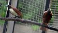 郊外の住宅からトラ5頭、違法飼育か インドネシア