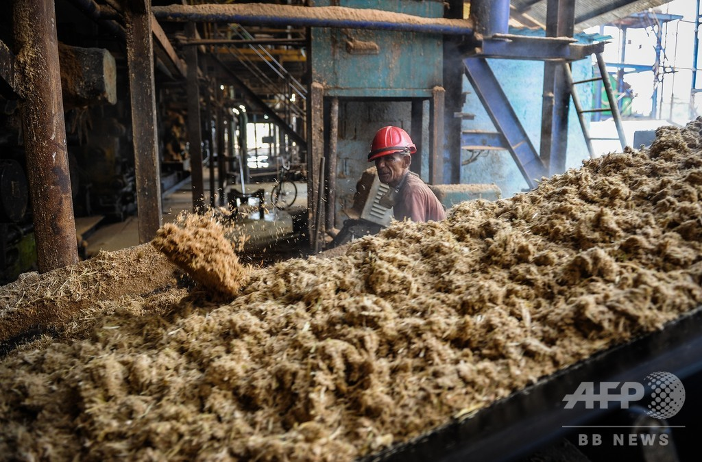 キューバ、気候変動でサトウキビ収穫期を見直しか 調査実施へ