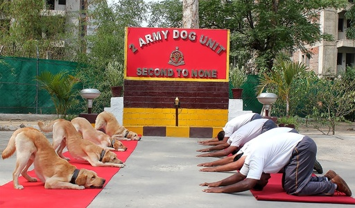 首相も軍人も犬も!「国際ヨガの日」 インド