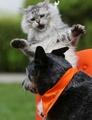 「シャー! おまえ近過ぎ」 独ペットショーで迫力の猫パンチ