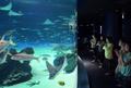 気分は人魚姫? エイやサメの水槽を前にヨガ 東京