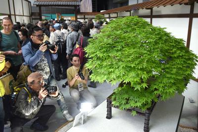 「BONSAI」人気過熱 盆栽世界大会開幕 さいたま