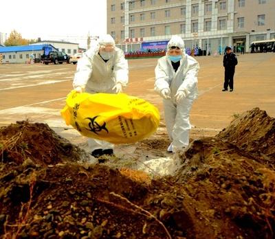 アフリカ豚コレラ、ハルビンで269頭死ぬ