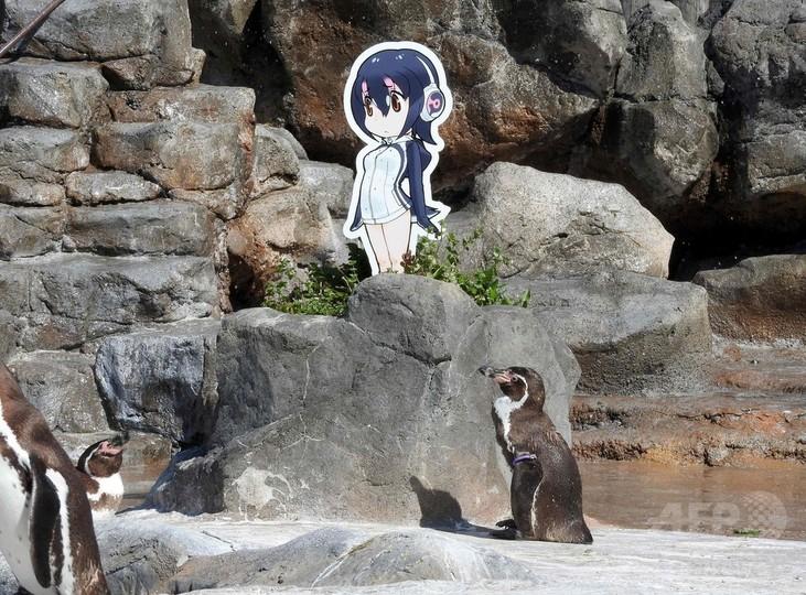アニメキャラクターに恋したペンギン、グレープ君逝く 世界で人気集める