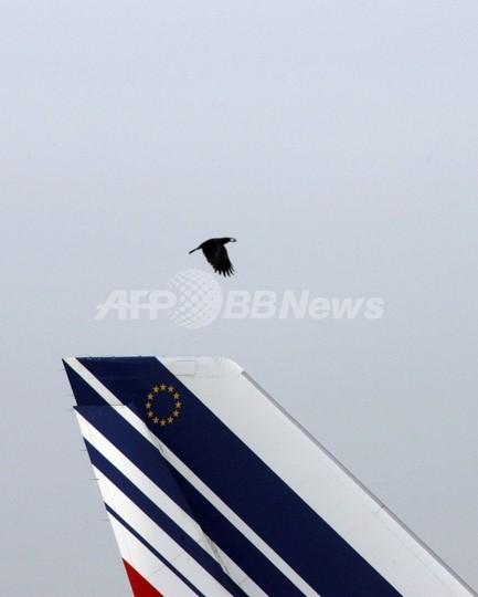 航空機へのバードストライク、今後増加の可能性 米FAAが指摘