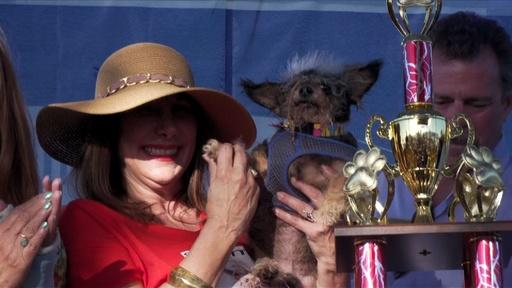 動画:不細工が自慢! 「世界一醜い犬コンテスト」 米カリフォルニア