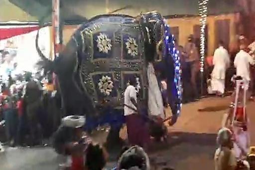祭りでゾウ2頭が暴走、17人負傷 スリランカ