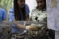 フィリピン当局、密輸動物300種を押収 過去最大規模