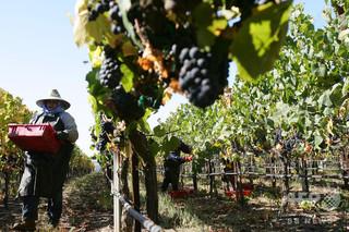 米中貿易戦争、カリフォルニア州の経済に影 農産物への関税が打撃