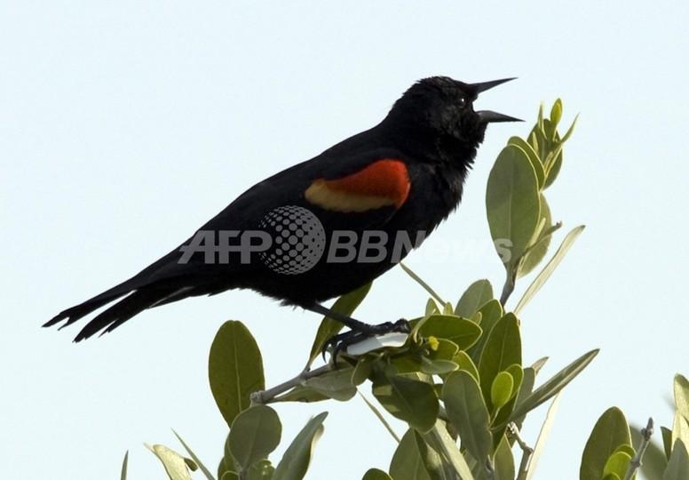町に降り注ぐ1000羽の鳥、ヒッチコックさながらの謎 米国