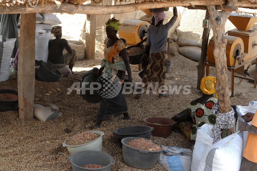 ピーナツが「黄金の山」に、対中輸出で高騰 セネガル