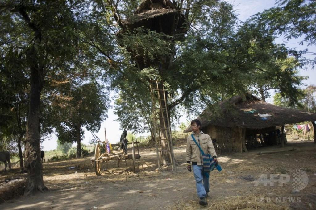 ゾウが来たら木の上に避難、ミャンマー