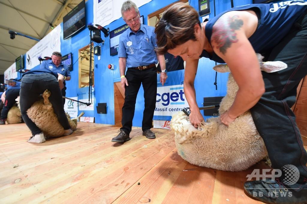 羊の毛刈り世界選手権、フランスで初開催 世界各地から名人集結